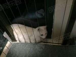 给猫咪跟换环境需要注意什么?
